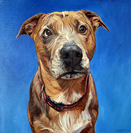 David Kennett Original Dog Portrait
