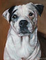 Boston Dog Painting