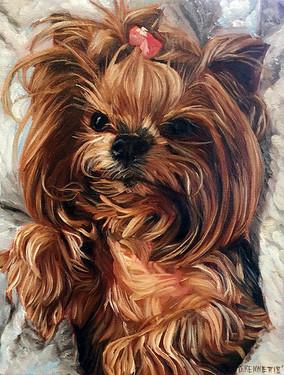 Adorable Dog Portrait Chicago