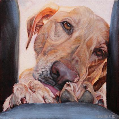 Labrador Portrait   Philadelphia