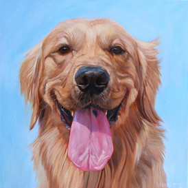 Golden Retriever Pet Portrait