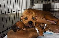 Dog-puppies-Momma-3311MW.jpg