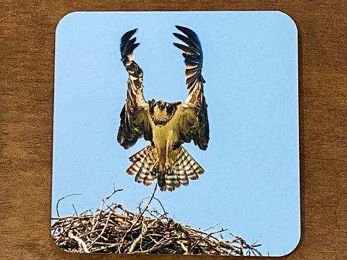 Taking Flight Osprey Coaster