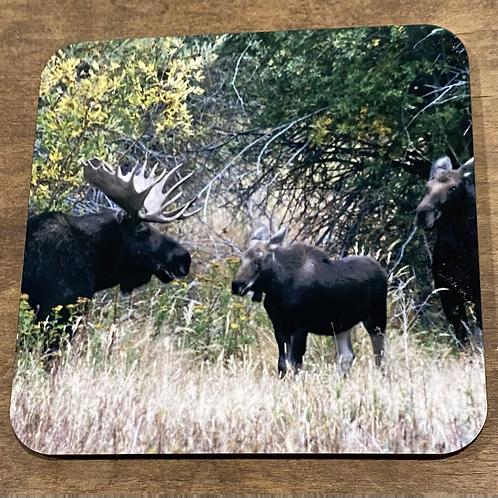 Moose family Coaster
