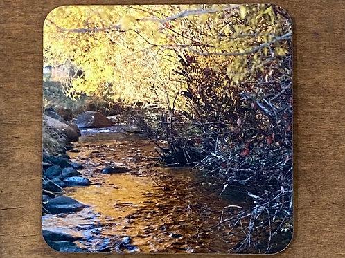 Golden Light In Autumn Coaster
