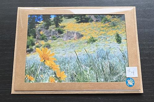 Wild Sunflowers Photo Note Card