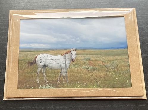 Stormy Horse Photo Note Card
