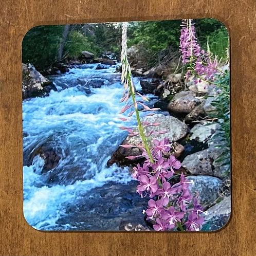 Fireweed On Willow Creek Coaster