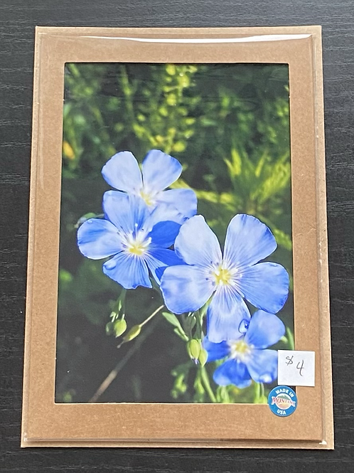 Blue Flax Wildflowers Photo Note Card