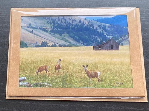 Whitetail Deer Photo Note Card