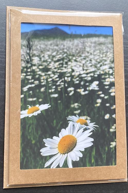 Bozeman Meadows Photo Note Card