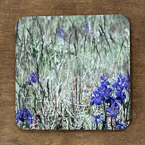 Dwarf Larkspur Wildflower Coaster