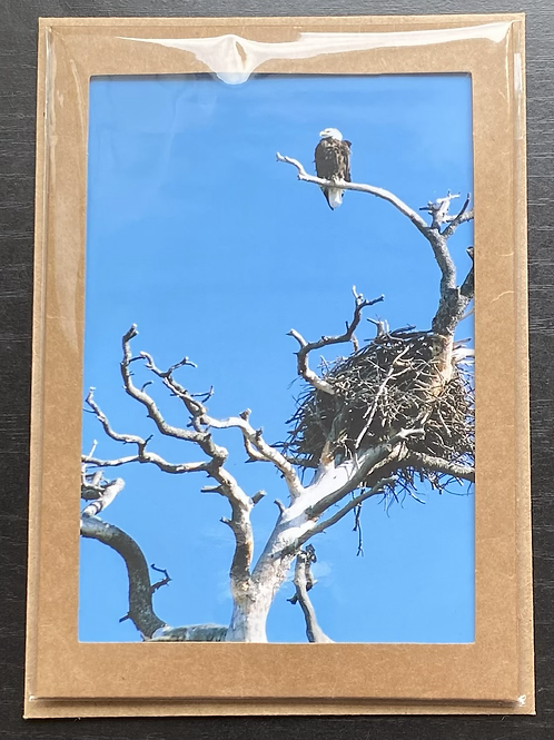 Eagle and Nest Photo Note Card