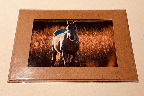 Albino Horse In Golden Light
