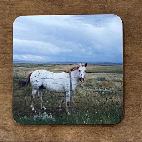Horse Lovers Coaster