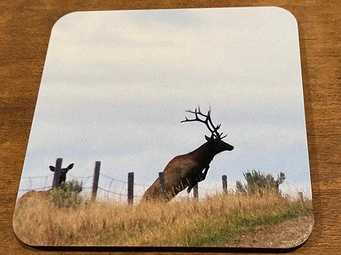 Bull Elk Leaping Coaster