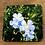 Thumbnail:  Blue Flax Wildflower Coaster