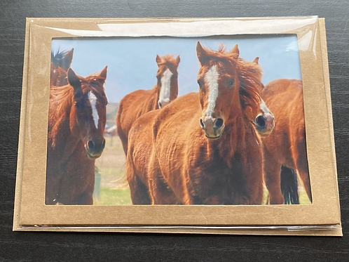 3Forks Horse Run Photo Note Card
