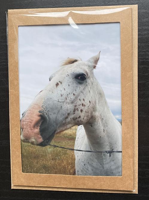Biting Bob Wire Horse Photo Note Card