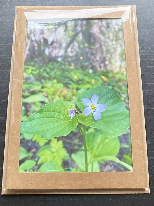 Canada Violet Wildflower Photo Note Card