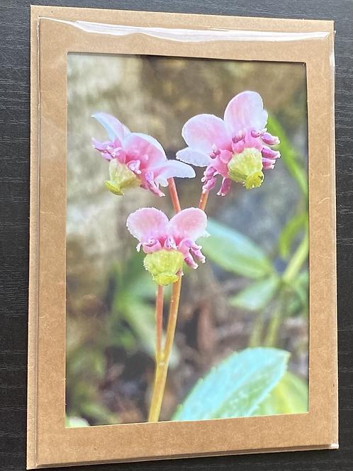 Pipsissiwa Wildflower Photo Note Card