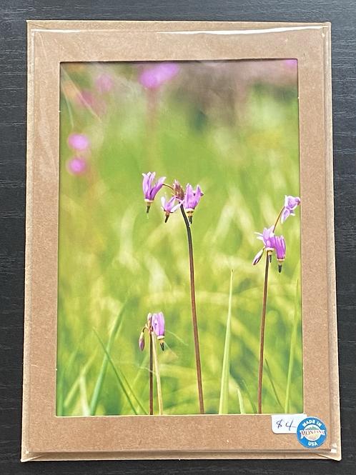Shooting Stars Wildflowers Photo Note Card