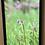 Thumbnail: Shooting Star Rare Wildflowers-11x17 Framed Poster Print
