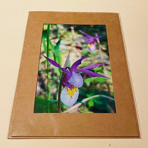 Fairy Slipper Wildflowers