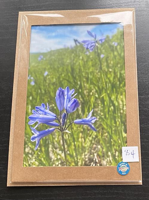 Wild Hyacinth Wildflower Photo Note Card