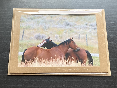 Scratching Horses Photo Note Card