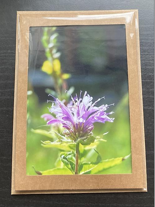 Wild Bergamot Wildflower Photo Note Card