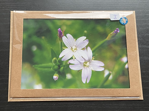 Willow-Herb Wildflowers Photo Note Card