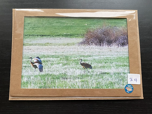Sandhill Cranes Mating Dance Photo Note Card