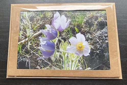 Pasqueflower Photo Note Card