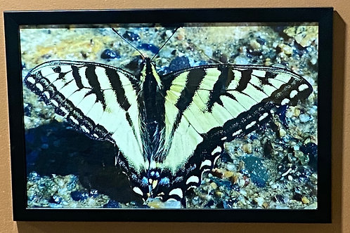 Swallowtail Butterfly-11x17 Framed Poster Print