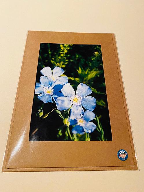 Beautiful Blue Flax Wildflowers
