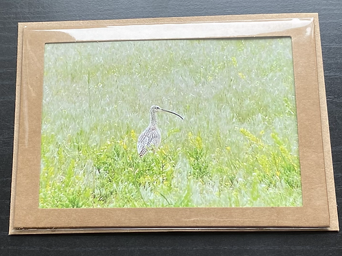 Curlew Photo Note Card