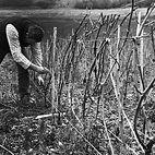 Travaux-vignes-Vincent-9.jpg