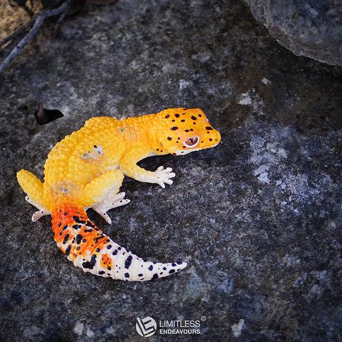 DIY Leopard Gecko Magnet