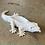 Thumbnail: Sassy Dragon Planters
