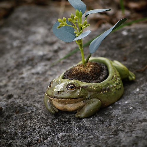 Green Toad Jewelry Holder/Planter