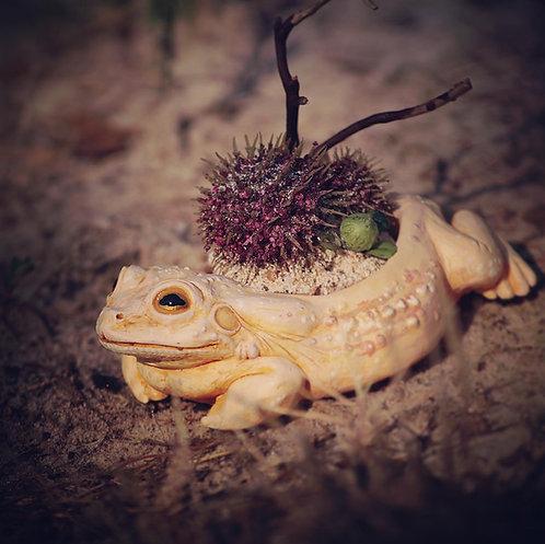 Gold Eyed Desert Toad Jewelry Holder/Planter