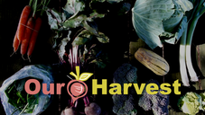 Our Harvest Cooperative