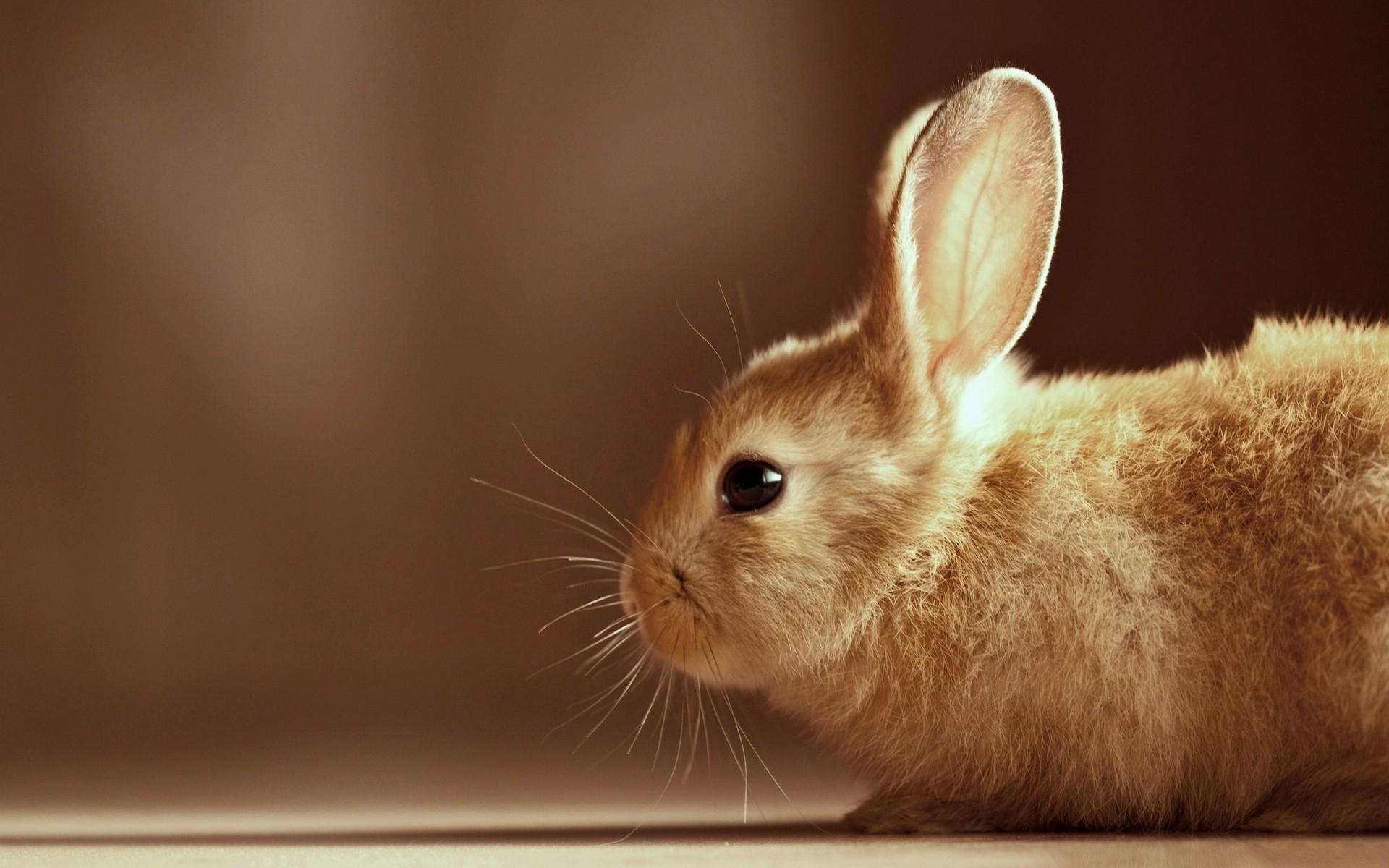 ws_Cute_rabbit_1920x1200