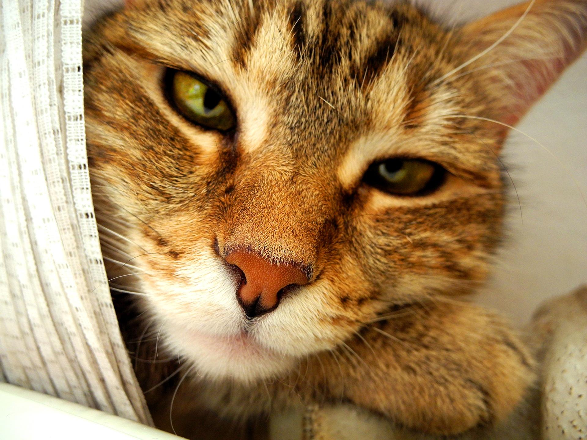 cat-1448962