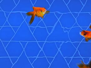 Teacher's Voice: Ember's Aquarium Illustrations