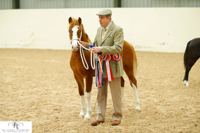 Ewpca foal show 2019 reserve champion