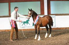 foal show d champion.JPG