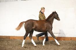 foal show b champion.JPG