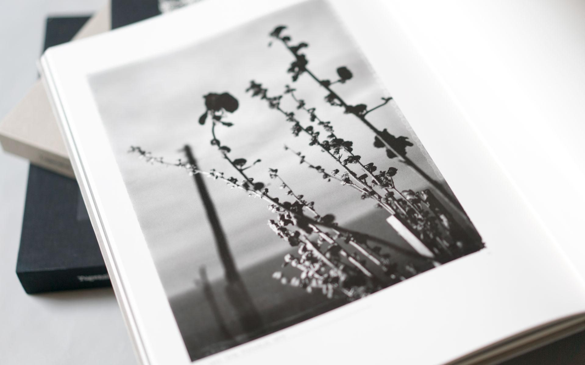 Flower is…